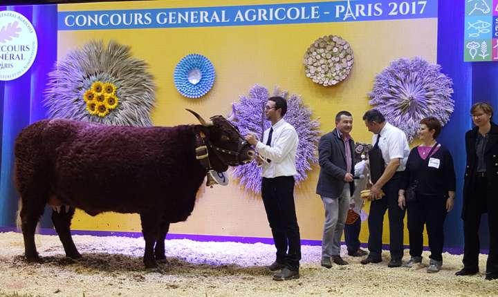 Vaca câstigàtoare anul acesta a concursului agricol