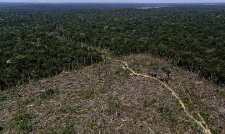 Despăduriri în bazinul Amazonului