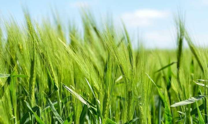 Agricultura va trebui să se adapteze schimbărilor climatice (Sursa foto: pixabay.com)