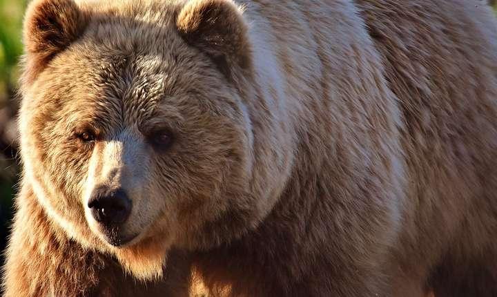 Cum pot fi prevenite atacurile urşilor asupra gospodăriilor? (Sursa foto: pixabay.com)