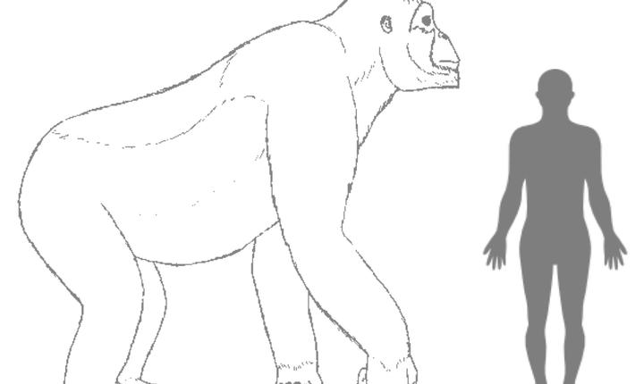 Gigantopithecus (Sursa: www.denckenberg.de/© H. Bocherens)