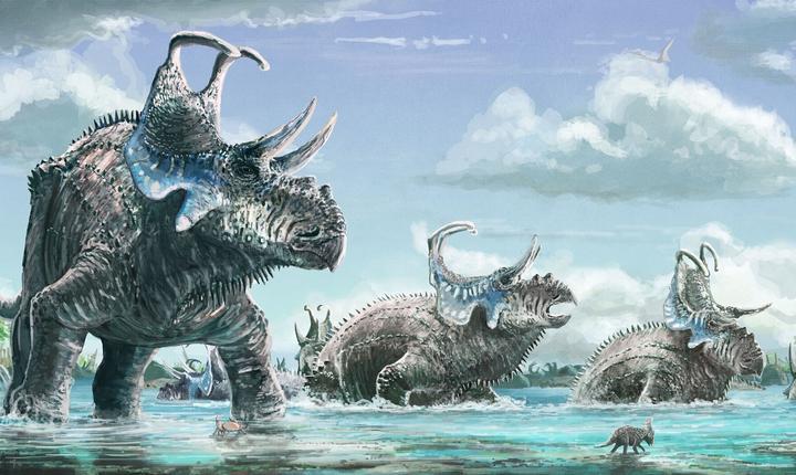 Machairoceratops cronusi (Foto: Universitatea din Ohio)