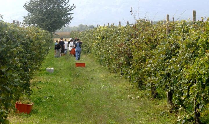 În România, forţa de muncă familială este cea mai răspândită formă de muncă în agricultură