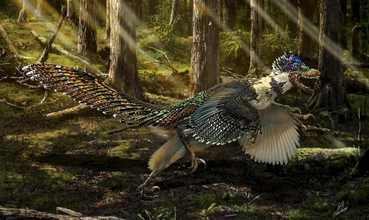 Dinozaurul cu aripi descoperit în China (Foto: Reuters/Chuang Zhao/Universitatea din Edinburgh)