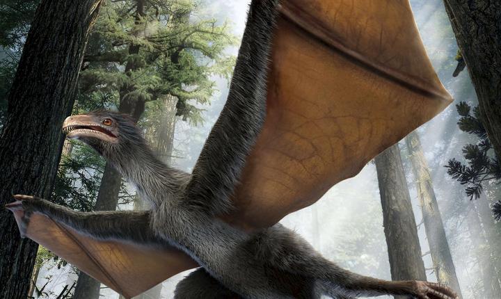 Dinozaur-liliac sau dinozaur-pasăre? (Foto: Reuters/Dinostar Co. Ltd)