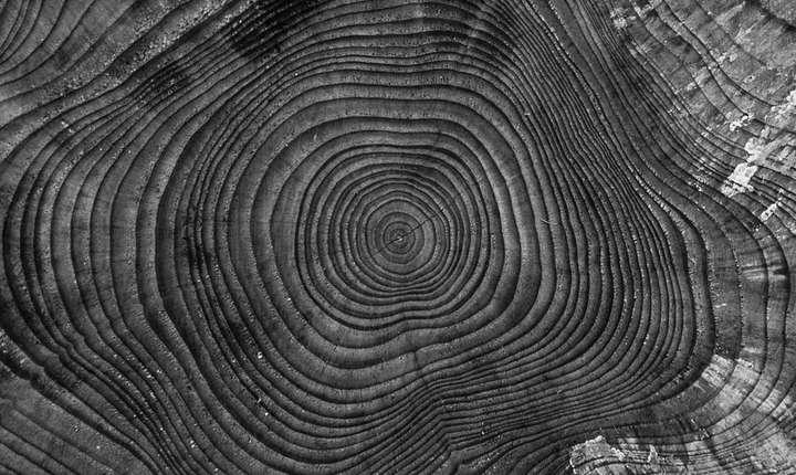 Pădurile virgine trebuie protejate, solicită Greenpeace România (Sursa foto: pixabay.com)