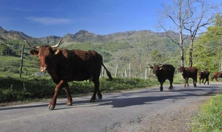 În Franţa, agricultorii se tem de acordul UE - statele Mercosur, pe care îl văd ca o ameninţare.