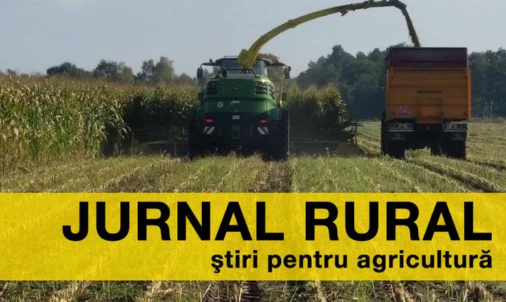 În România, producţia de grâu a crescut anul trecut cu 3,5%, până la 7,85 milioane de tone