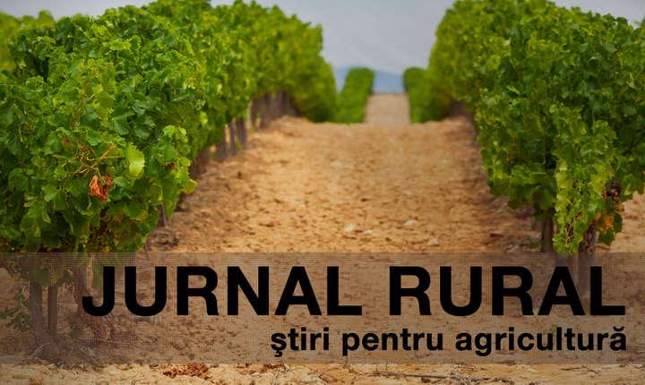 România ocupă penultima poziție în Uniunea Europeană în funcție de suprafața de teren certificată pentru agricultură organică