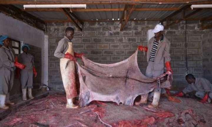Angajatii unui abator din Kenya tinând o piele de màgar, februarie 2017