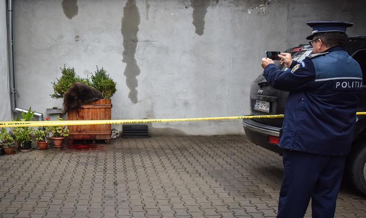 Un poliţist pozează ursul împuşcat la Sibiu (Foto: AFP/Silvana Armat)