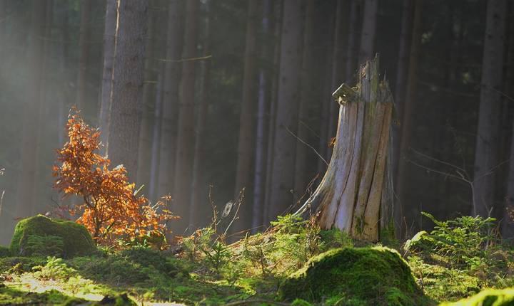 ONG-urile ecologiste se tem că legislaţia contravenţiilor silvice va fi slăbită de Parlament (Sursa foto: www.pixabay.com)