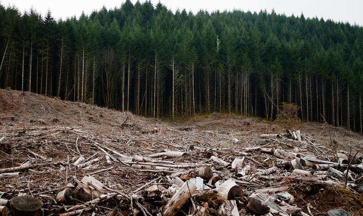 Holzindustrie Schweighofer a și recunoscut că ea este cea cercetată, dar colaborează cu autoritățile