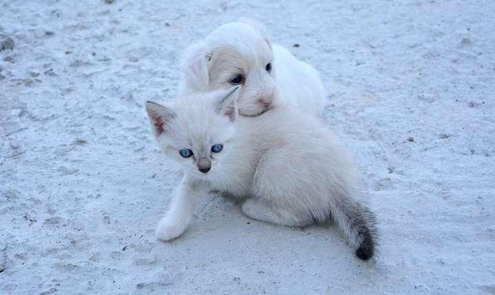 Pisicile şi câinii de companie, pericol mai mare decât se credea pentru mediu? (Sursa foto: pixabay.com)