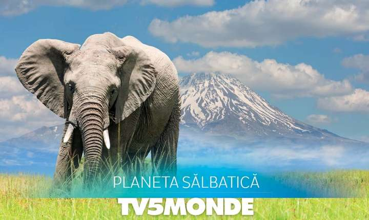 Planeta sălbatică la TV5Monde
