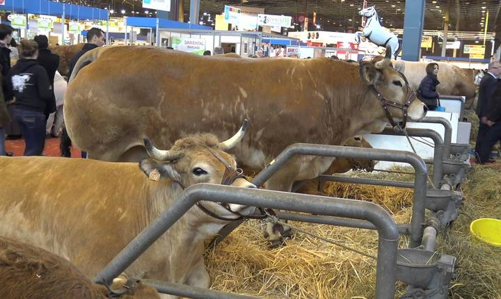 Criza laptelui, începută în 2015 , a antrenat dupa ea criza sectorului bovin