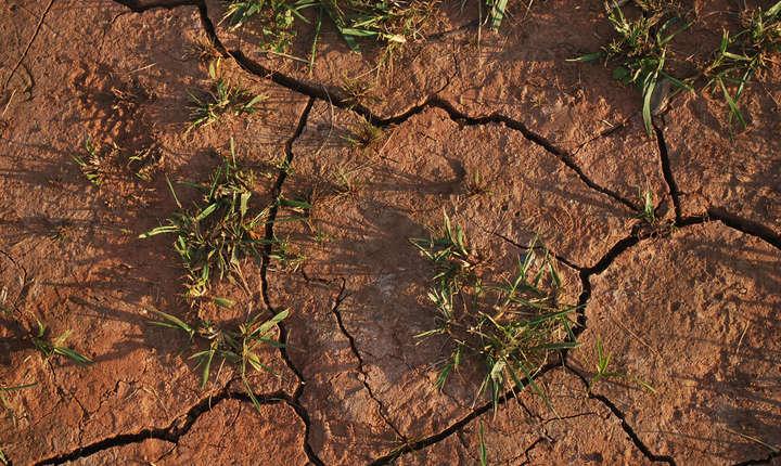 Comisia Europeană ia în calcul acordarea unei despăgubiri de daune în valoare de până la 15.000 de euro per agricultor