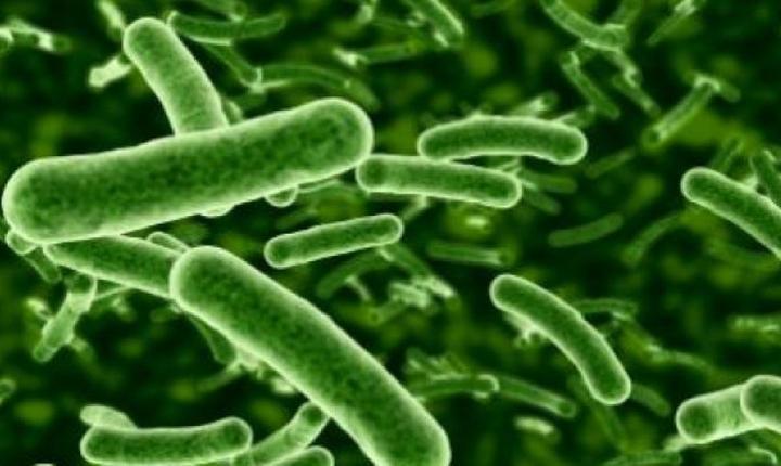 Sifilis la microscop