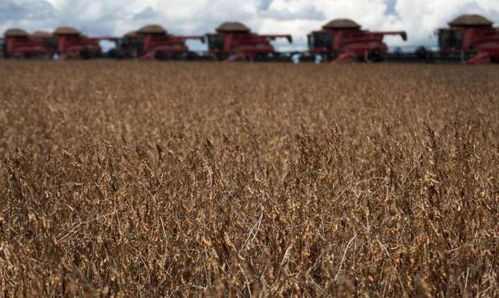 Brazilia este noul campion mondial în ce priveste culturile de soia.
