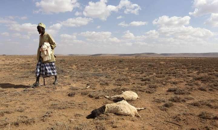 Seceta din Somalia a fàcut ravagii