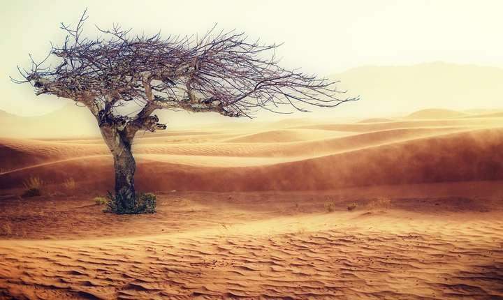 Schimbările climatice pot provoca o criză umanitară fără precedent, avertizează cercetătorii (Sursa foto: pixabay.com)