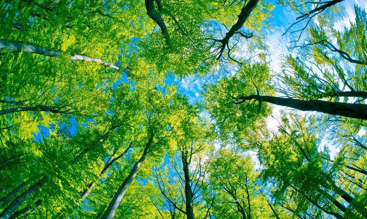 Pe Terra sunt trei trilioane de copaci, potrivit unui studiu.