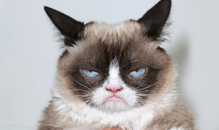Clipurile video cu pisici induc privitorului o atitudine pozitivă, potrivit unui studiu american.