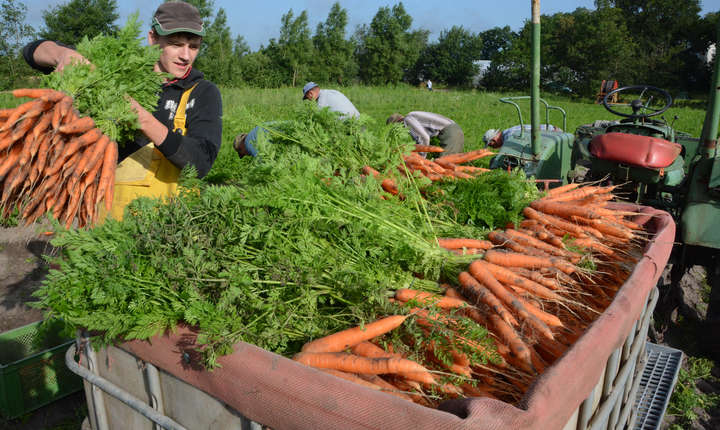 Regatul Unit este unul dintre cei mai importanți importatori de produse agroalimentare europene