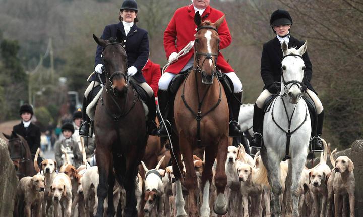 Vânătoare de vulpi cu câini