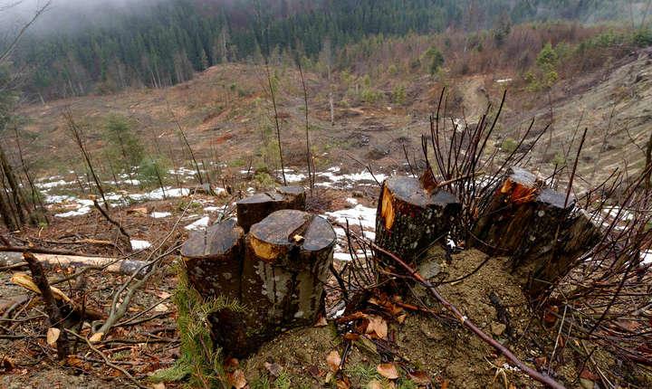 Agent Green atrage atenţia asupra tăierilor abuzive de păduri (Sursa foto: site Agent Green)