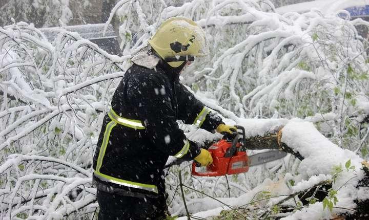 100 de copaci au fost doborâți la pământ din cauza vântului puternic și a zăpezii