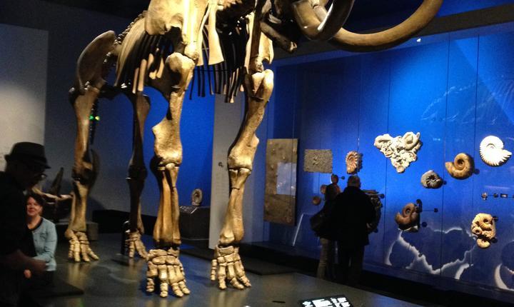 Nici mamutii (gàsit la doi pasi de muzeu) nu lipsesc din sàli