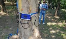 Tomograful pentru arbori (Sursa foto: Primăria Capitalei)