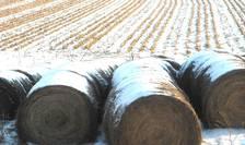 Fermierii se plâng de birocratizarea sistemului prin care sunt accesate fondurile europene