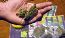 Aproximativ 140.000 de persoane sunt interpelate anual în Franta pentru consum de cannabis dar pedepsele cu închisoarea sunt foarte rare (cam 1% dintre cazuri).