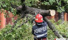 Copac căzut în timpul unei furtuni (Sursa foto: site ISU Bucureşti-Ilfov)