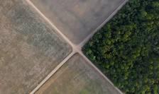 O parte din pàdurea amazonianà din Brazilia a fost tàiatà pentru a làsa loc culturii de soia.