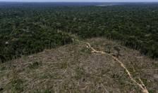 Brazilia, zona Amazonului desfigurată de despăduriri