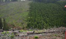 Dezastru în Parcul Naţional Piatra Craiului, 2010