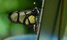 O treime din speciile de insecte sunt ameninţate cu dispariţia.