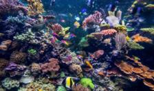 Potrivit experţilor, o specie animală sau vegetală din opt este ameninţată cu dispariţia în deceniile următoare.