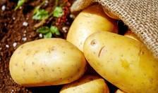 De câțiva ani, cartoful este un adevărat campion al scumpirilor.