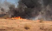 Incendiu în Delta Văcărești (Sursa foto: Facebook/Cristian Pătrașcu)