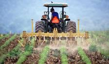 Interdicția în chestiunea neonicotinoidelor îi lasă pe fermierii români fără unelte de lucru