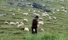 Dupa protestele ciobanilor, parlamentarii promit schimbarea Legii Vanatorii