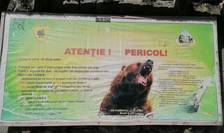 Primul studiu genetic asupra populației de urși din România (Sursa foto: RFI/Cosmin Ruscior)