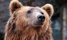 Culoare ecologice pentru urşi, recomandate autorităţilor de ONG-urile de mediu (Sursa foto: pixabay)