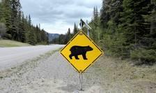 Atacuri tot mai frecvente ale urşilor (Sursa foto: pixabay.com)