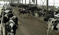 Mitru Crișan a ridicat întâi o fabrică de prelucrare a laptelui