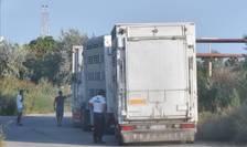 Transport de animale vii pe timp de căldură excesivă (Sursa foto: Animals International)